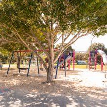 Ewing park shade trees