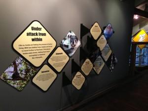 Koala facts, environment for kids