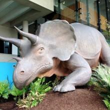 the queensland museum dinosaurs