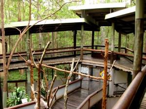 daisy hill conservation and koala centre