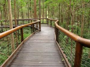 boardwalk into the bush