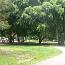 Kalinga Park Paths