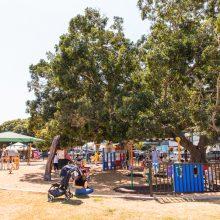 Bulimba Memorial Park playground tree shade