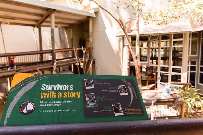 koala survivor stories