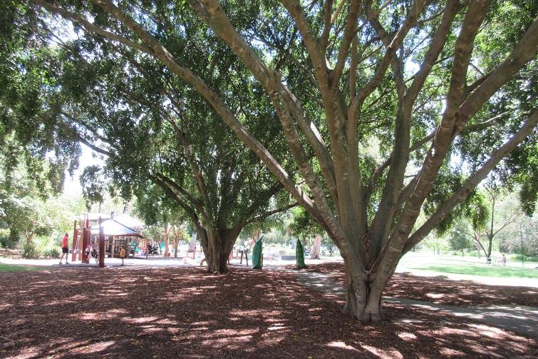 Kalinga Park trees