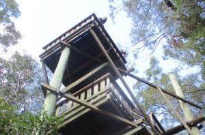 bird eye viewing platform daisy hill