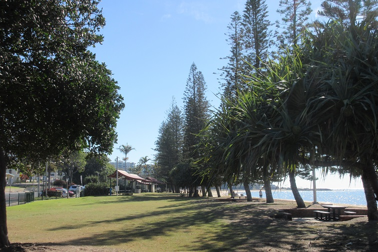 suttons beach treeline