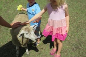 Serendipity Farm, Upper Brookfield