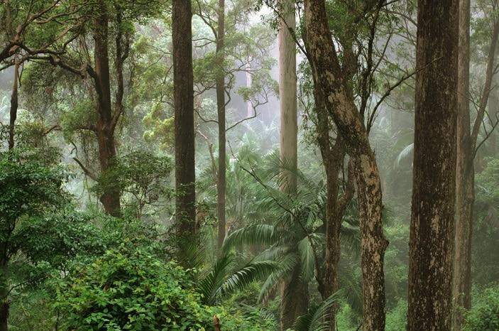 mount glorious rainforest mist