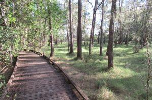 boardwalk through john oxley reserve