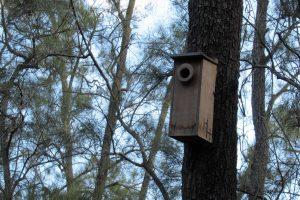 Possum box in john oxley reserve