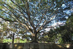 majestic northside tree brisbane