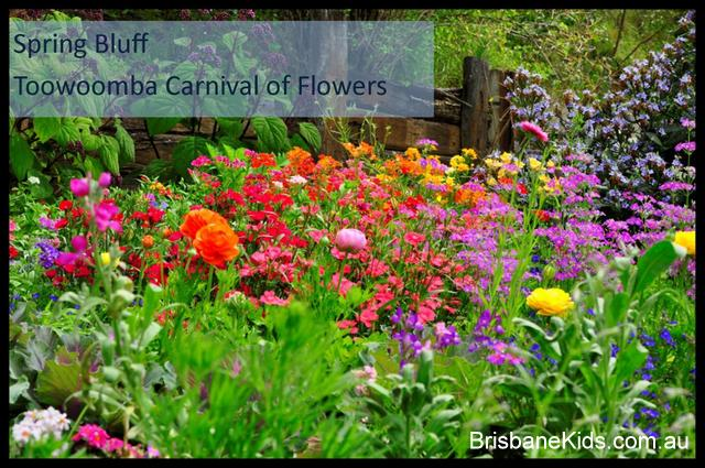 spring bluff toowoomba carnival of flowers