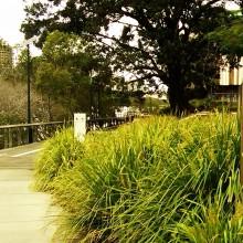 river walk southbank