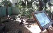 wombat exhibit
