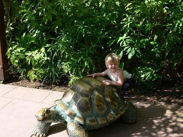 turtle visit