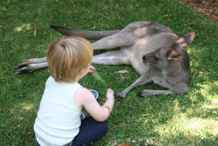 kangaroo joey pump instructions