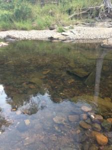 edward allison creek