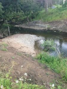 beautiful brisbane freshwater creek