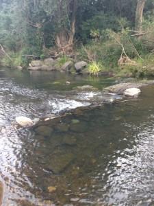 flowing brisbane creek