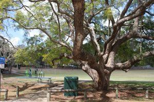 shady brisbane park