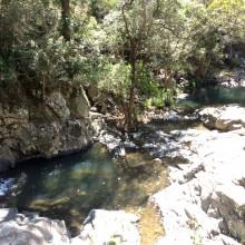 Cedar Creek Falls Mount Tamborine Brisbane Kids