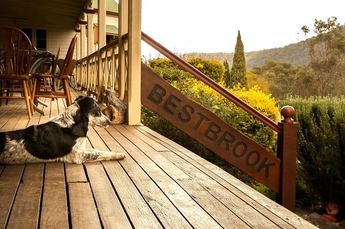 dog at bestbrook farm