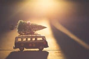 real christmas trees brisbane
