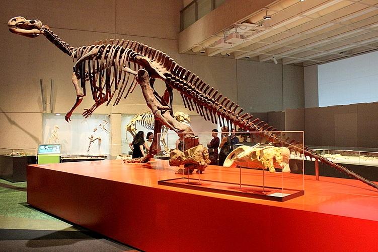 Exhibition Displays Brisbane : Lost creatures exhibition queensland museum south bank