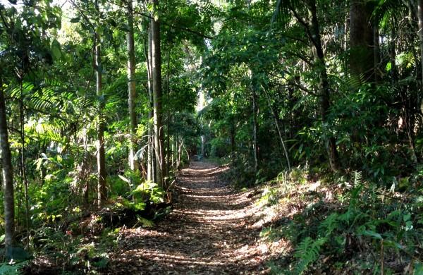 mt tamborine rainforest