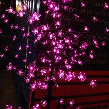purple fairy lights at night in brisbane