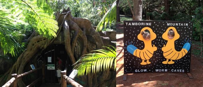 glow worm caves mount tamborine
