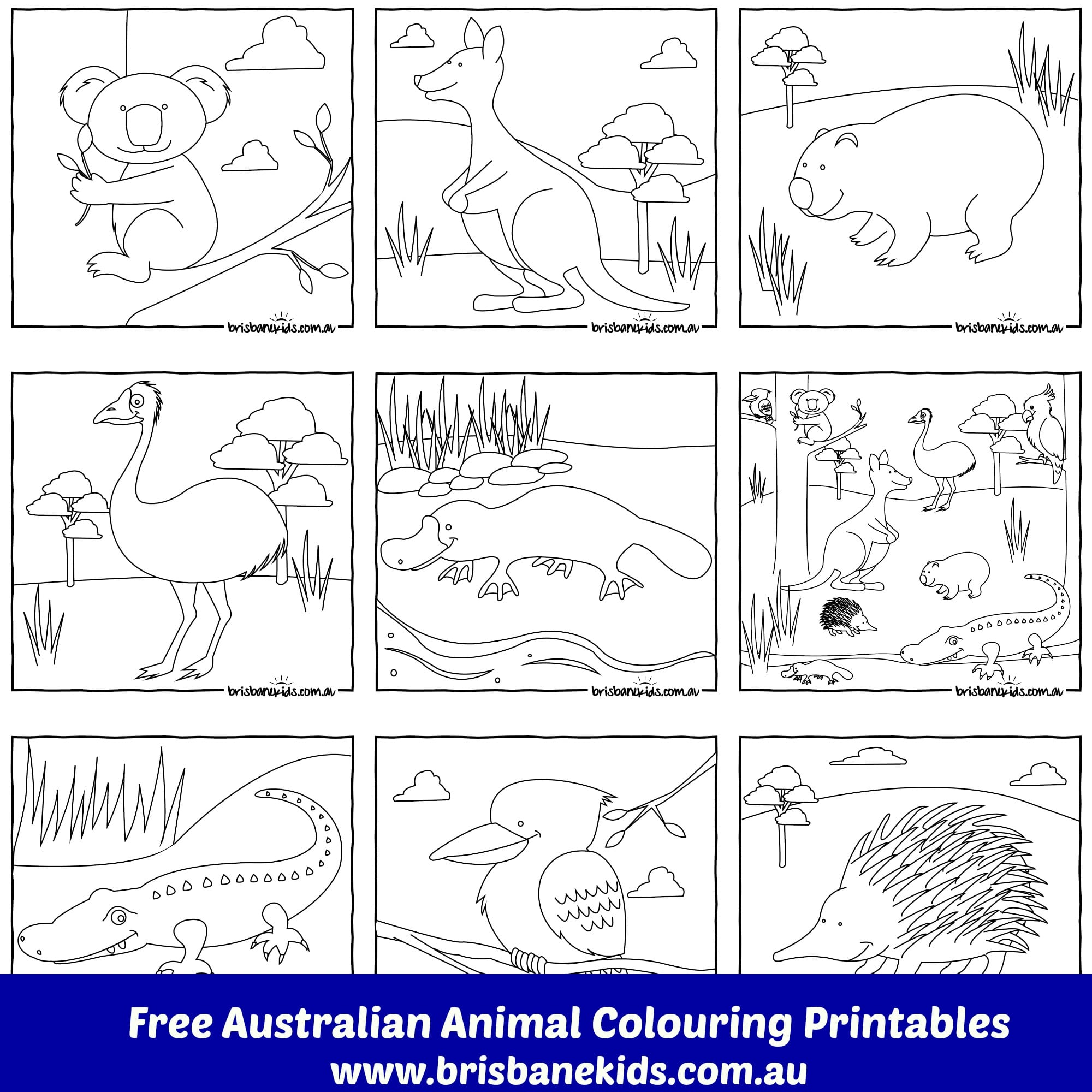 Collouring: Australian Animals Colouring Pages • Brisbane Kids