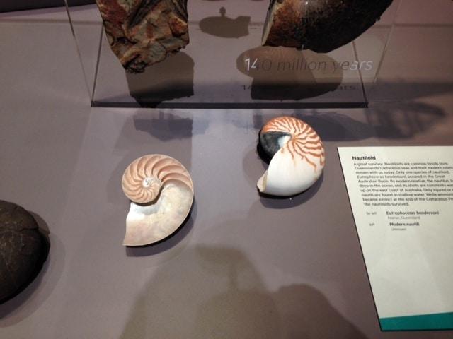 queensland museum snail fossil