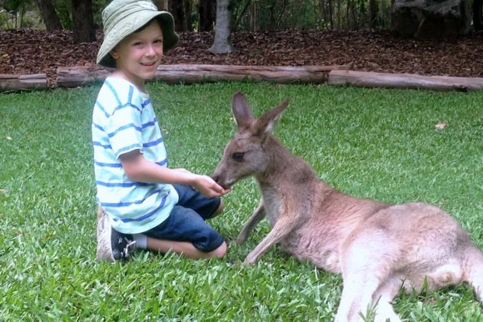 Feeding kangaroo at Australia Zoo