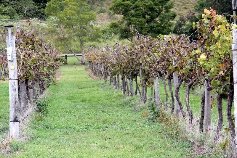 Canungra Valley Vineyards