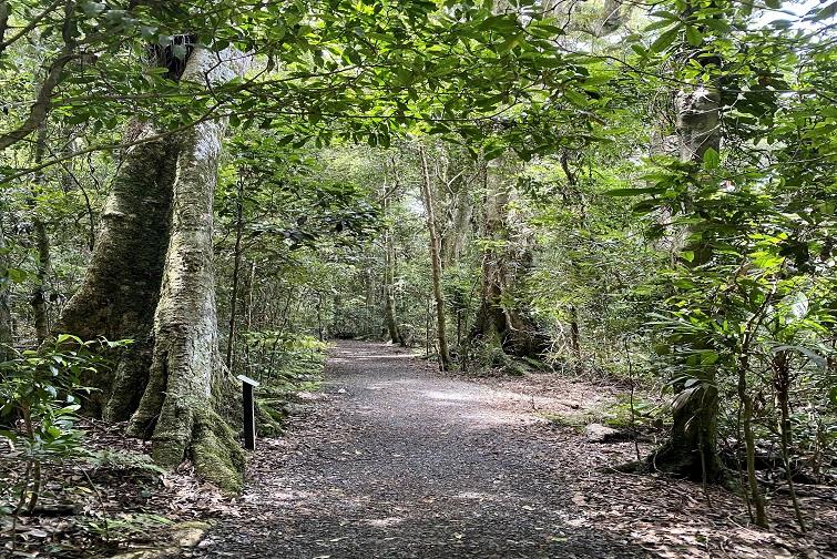 a track leading through the rainforest at Binna Burra Lamington National Park