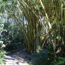 Rainforest Walk at the Big Pineapple