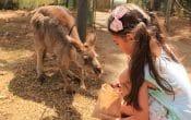 girl feedinig kangaroo at QLD ZOO
