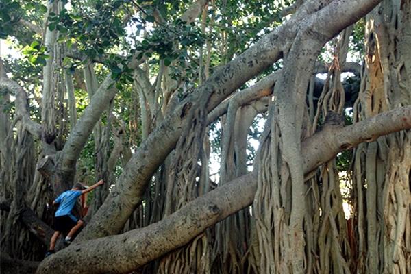 The Best Kids Climbing Trees In Brisbane