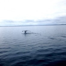 Whale Watching from Brisbane for families