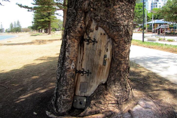 Gollum Tree Scarborough