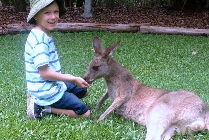 Kangaroo Facts Brisbane Kids