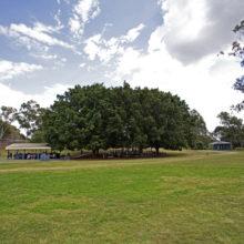 Sherwood Forest Park