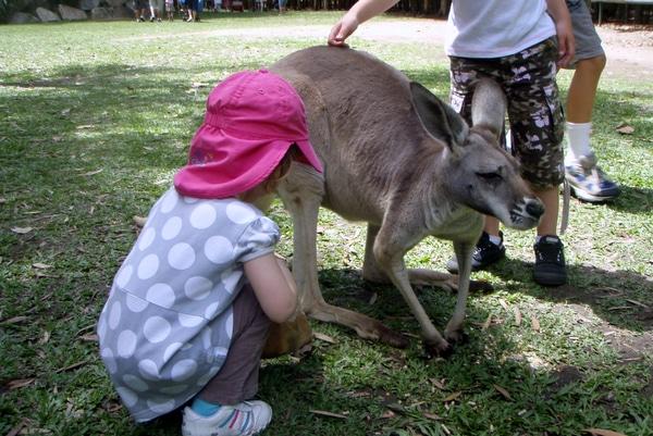 Feeding Kangaroos Brisbane