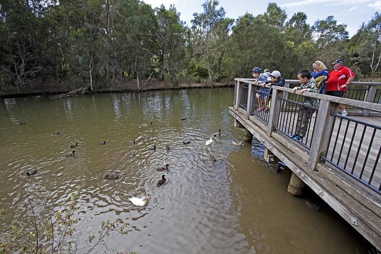 sherwood duck pond