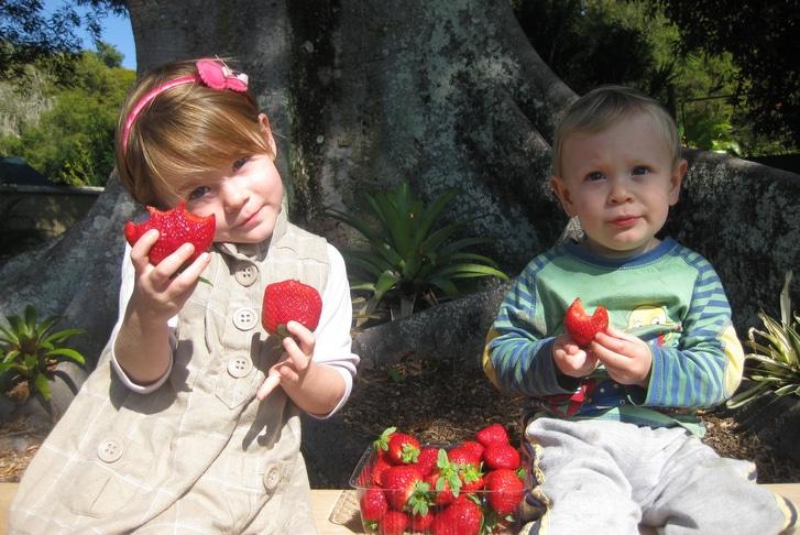 Pick your own strawberries Brisbane
