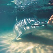 Dolphin feeding at Tangalooma