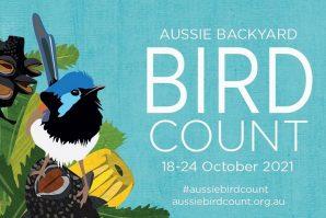 bird counting australia