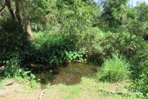 Moggill Creek in Brookfield